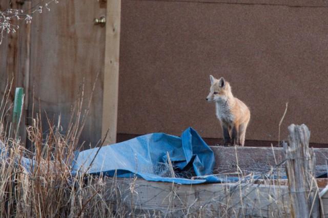 fox-8621