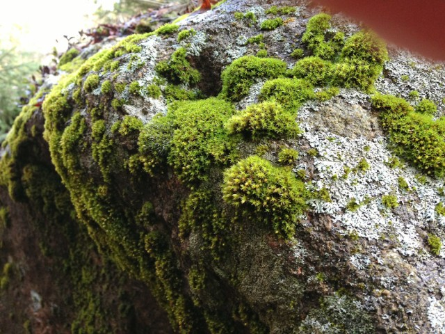 Moss on an un-rolling stone