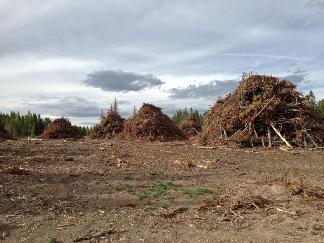 Large slash piles waiting to be burned.