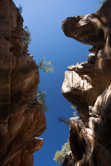Looking straight up from the bottom of Willis Canyon