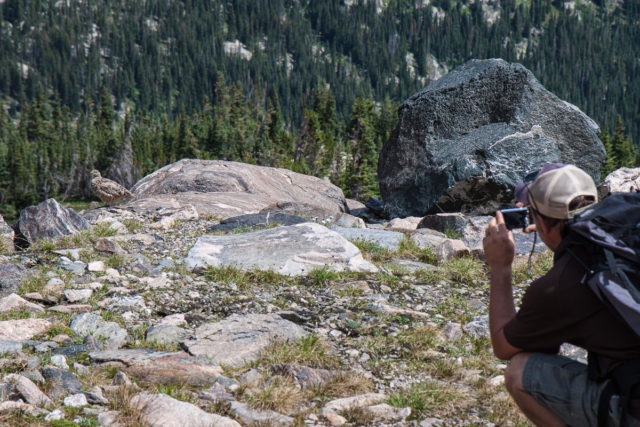 Matt takes a photo of some Ptarmigan.