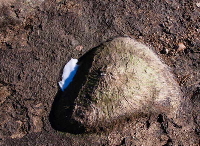 Hairy boulder.